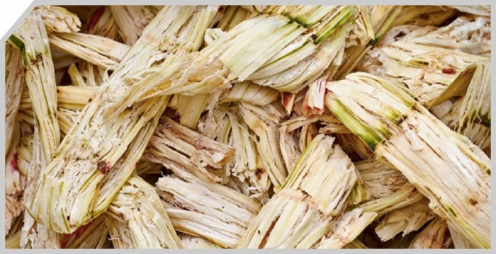 Feedstock-Biomass-bagasse3